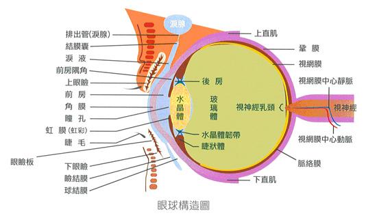 视力保护器电路的设计